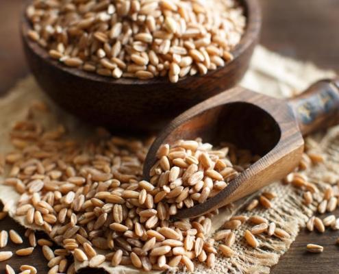 Spelt ancient grain